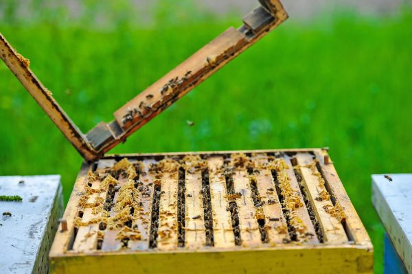 KOŠNICA PČELE